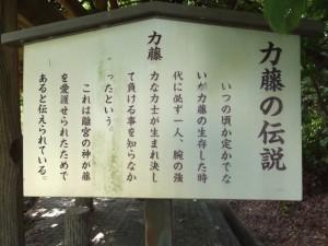 離宮院公園、「力藤の伝説」の説明板(小俣町本町)