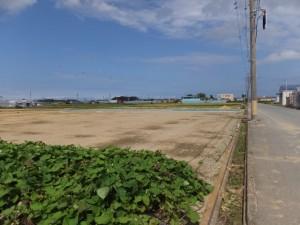 左方向に高向大社の社叢を遠望(宮川の堤防道路から近鉄山田線方向へ)