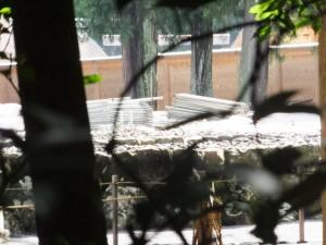 北御門参道から望む更地になった旧宮の御敷地(外宮)