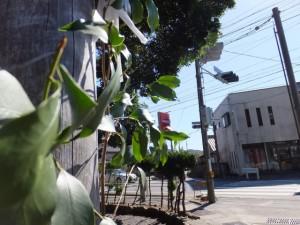 佐美長神社の鳥居付近から望む佐美長神社前の交差点