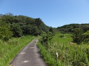 青峰山道の案内板から青峰山登り口へ