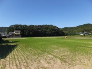九鬼岩倉神社の社叢