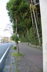 お白石持行事当日の朝(御幸道路)