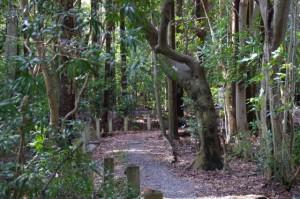 上御井神社の遥拝場所への小道(2012年03月)