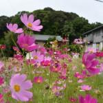 宇治山田神社(那自賣神社を同座)の社叢、興玉の森