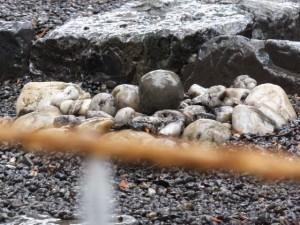 豊受大神宮の古殿地とお気に入りの丸い石(外宮)