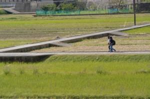 熊野川の堤防道路から眺める大斎原への参道