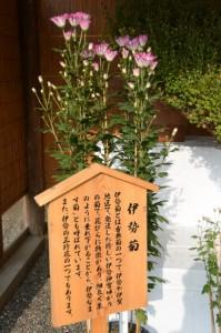 第60回菊花展示(外宮)