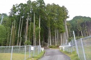 船木神社(大紀町船木)への参道
