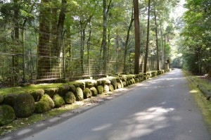 瀧原宮へ(熊野古道)
