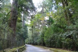 熊野古道伊勢路、足神から瀧原宮へ