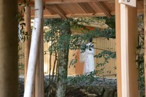 これから遷宮諸祭儀が斎行される若宮神社