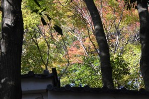 大水神社(川相神社、熊淵神社を同座)前から望む旧林崎文庫の木々