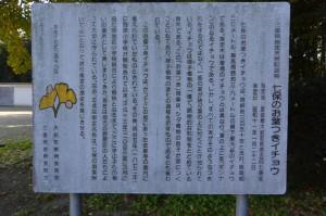 「七保のお葉つきイチョウ」の説明板(大紀町野原)