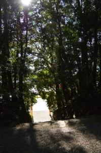 石階と鳥居(佐美長神社)