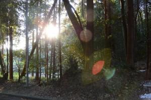 旧村社「谷社」跡、上之郷の石神付近(志摩市磯部町)