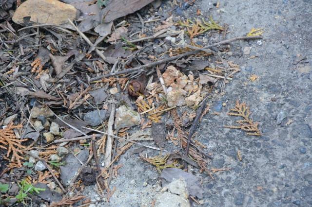 上之郷の石神、旧村社「谷社」跡と秋を見つけて(志摩市磯部町)