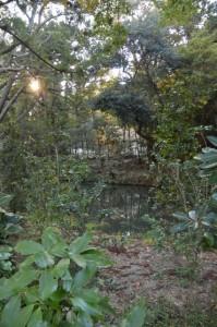 御池越しに望む御造営中の土宮