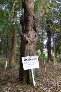 積田神社の神柿(名張市夏見)