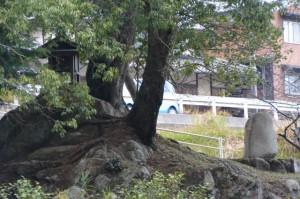 名張川(供奉川)の対岸に望む鏡池社(名張市夏見)