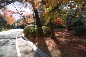 紅葉(神宮美術館付近)