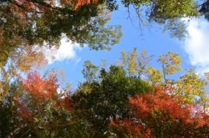 紅葉(黒門〜神宮文庫)
