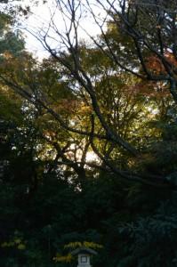 紅葉(御幸道路から望む神宮徴古館方向)
