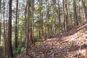 下久具の大岩付近から山頂へ