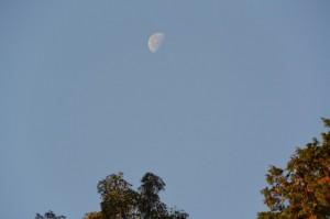 倭姫宮から望む朝の月