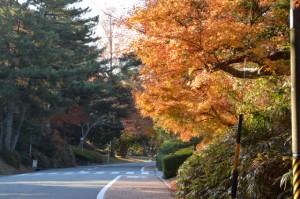紅葉(神宮徴古館ほかの駐車場付近)