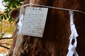 仙宮神社(南伊勢町河内)