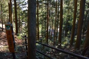 裏山にある津波一次避難場所から望む穂原神社(南伊勢町伊勢路)