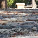 お気に入りの丸い石は生きていた?(外宮)