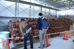 山積みにされていた檜皮の束(斎宮復元建物工事見学会)