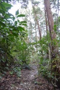 的山公園駐車場から鴨神社への山道