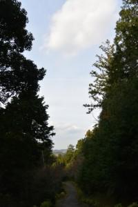 的山公園のコンクリート舗装路