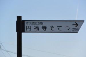「市天然記念物 円福寺そてつ → 240m」の案内板