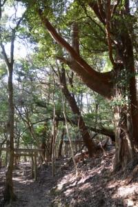 五本松神社の参道