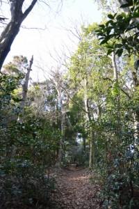 五本松神社との分岐から鼓ヶ岳への山道