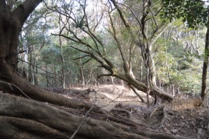 鼓ヶ岳から五本松神社との分岐への山道、倒木