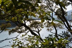 栃木バスのりば付近の祠前から望む古和浦湾(南伊勢町栃木竃)