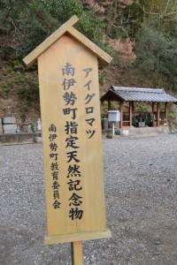 アイグロマツ、南伊勢町指定天然記念物の立札