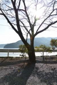 金網山西方寺(奈津観音)付近