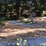 旧宿衛屋が撤去された跡地(月讀宮)