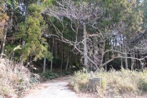 山田寺から伊勢自動車道の先、左方向へ