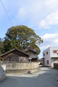 宇須乃野神社の社叢、高向の札場(3)付近
