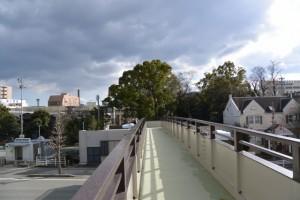 宮町歩道橋から望む今社の社叢(伊勢市宮町)