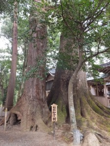 楠椙和合の樹(水屋神社)