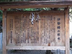 「伊勢椿の原木」の説明板(丹生神社)