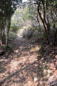 五ヶ所浅間山の参道(山道)、舗装路の先